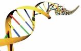 DNA Biometrics